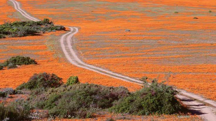 road trips, namaqualand